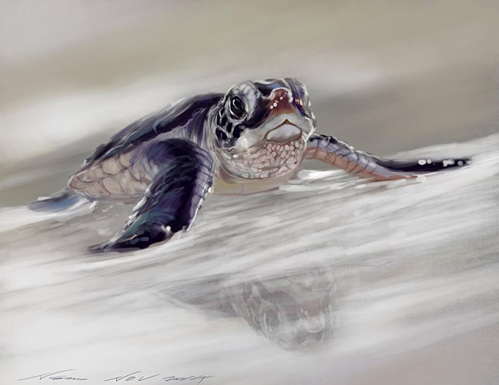 sea-turtle-low-view Photoshop work